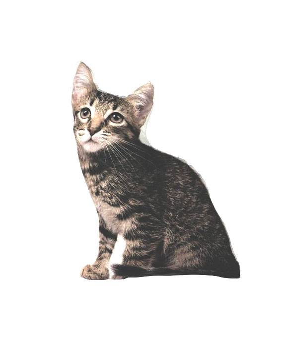 coussin-3d-forme-chat-1.jpg