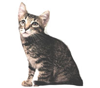 coussin-3d-forme-chat.jpg